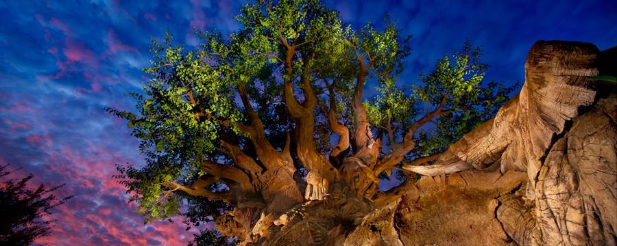 Animal Kingdom Tree of Life Photo