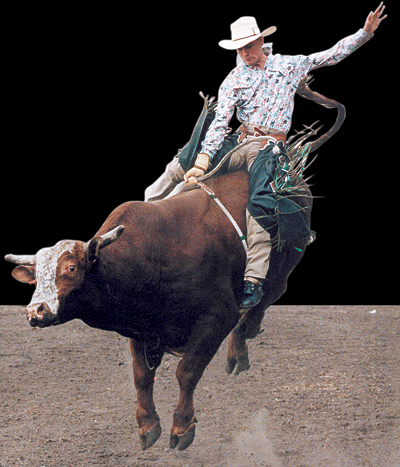 Bull Rider at the Silver Spurs Rodeo