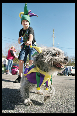 Dog Parade for Mardi Gras
