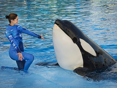 Orlando dinner show returns dine with shamu al 39 s blog for Ocean fish market orlando fl